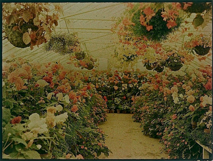 Flowers in a Greenhouse, early 20 c., Te Papa