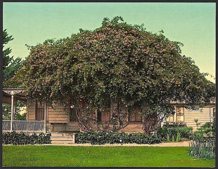 The Sunday porch:enclos*ure -- Pasadena, c. 1902, Library of Congress