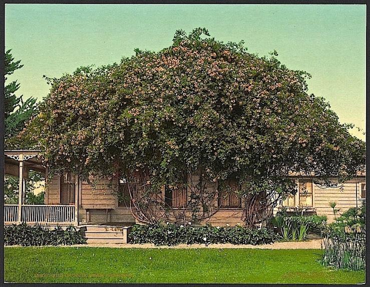 The Sunday porch:enclos*ure -- Pasadena, c. 1902, Library of Congress