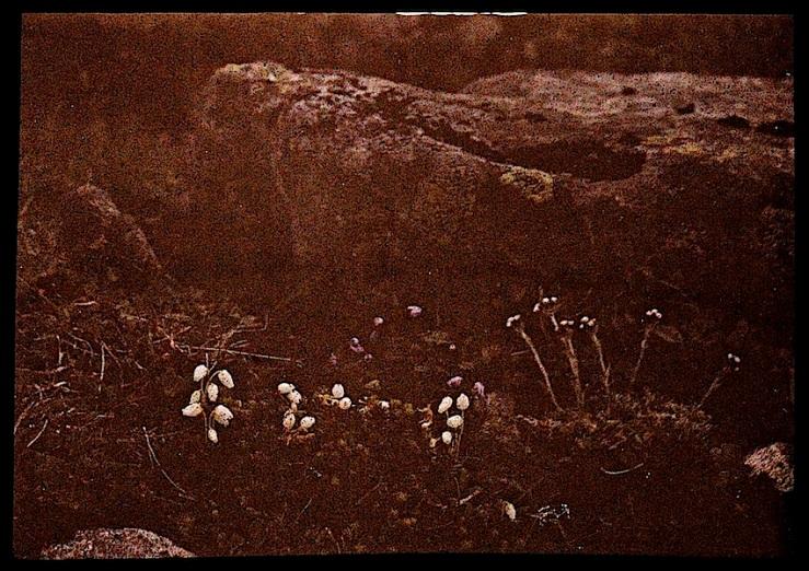 3 Groundcover Dreams, ca. 1912, via Nasjonalbiblioteket