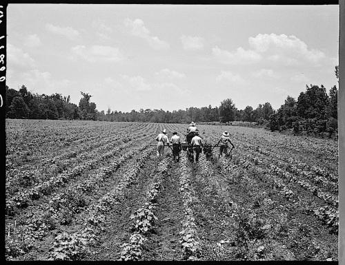 Delta Coop Farm, 1937, Library of Congress