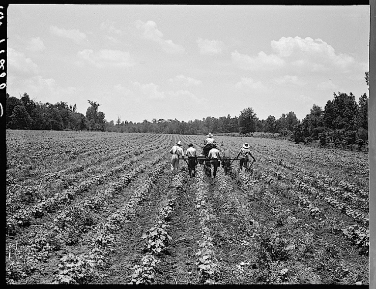 Delta Coop Farm, 1937, Library of Congress