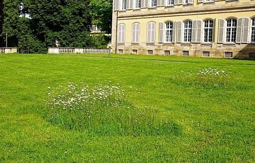 Hohenheim lawn 2, enclos*ure