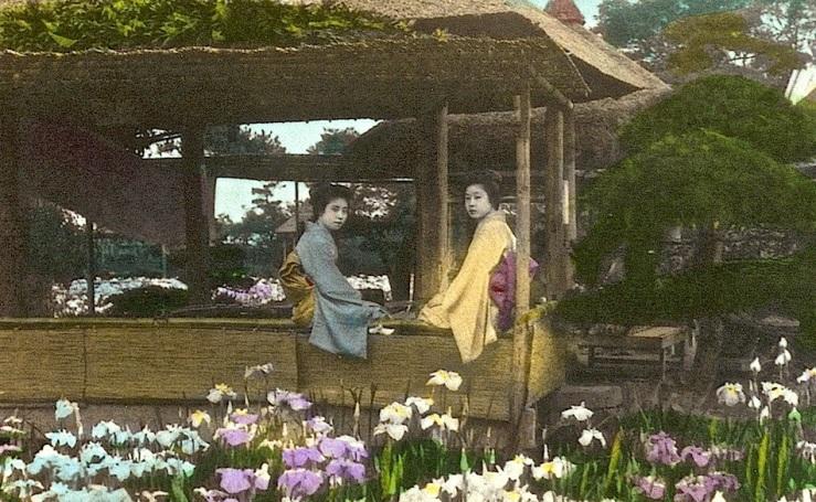 Japanese Iris Garden, cropped 1