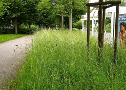 Urban meadow, Stuttgart suburbs, by enclos*ure