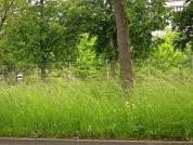 Urban meadow, Stuttgart suburbs, by enclos*ure