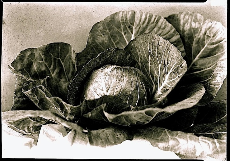 Cabbage portrait, Mississippi Dept. of History and Archives