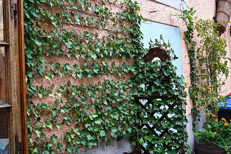 Esslingen, Germany, doorway seat ivy, by enclos*ure