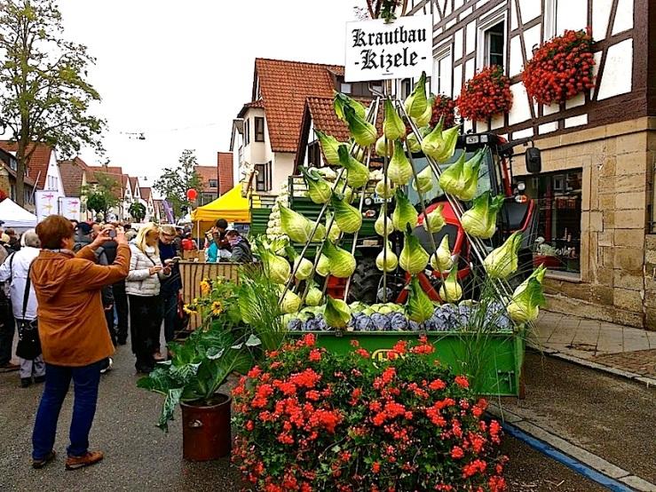 10 Cabbage Fest, enclos*ure