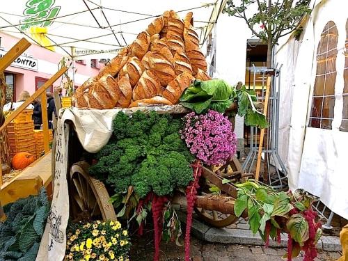 22 Cabbage Fest, enclos*ure