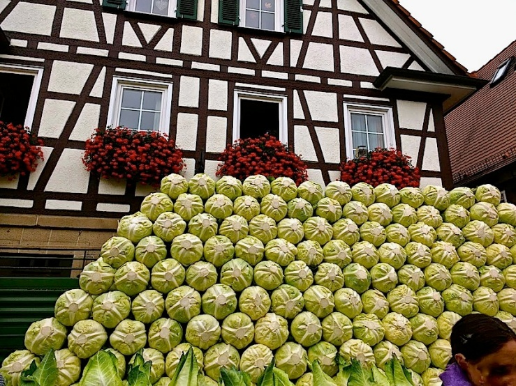 3 Cabbage Fest, enclos*ure
