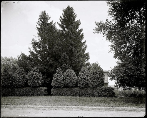 3 The Firs, ca. 1900, Library of Congress