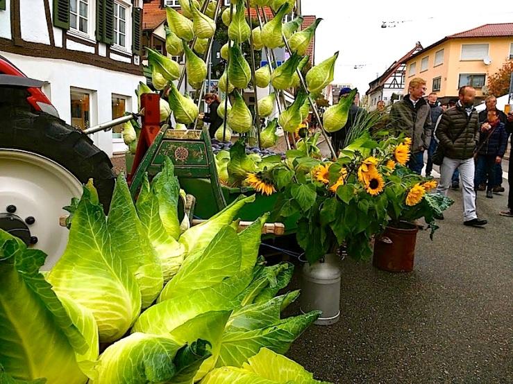 7 Cabbage Fest, enclos*ure