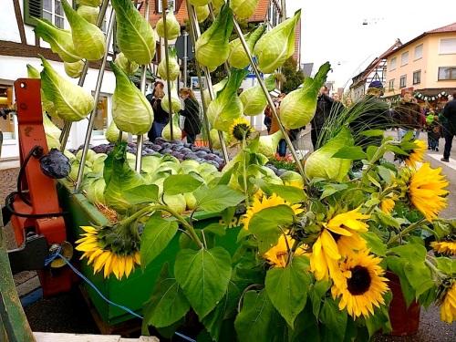 8 Cabbage Fest, enclos*ure