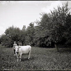 The family cow. Abby Tillotson managed The Firs.