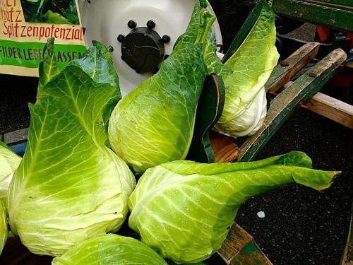 9 Cabbage Fest, enclos*ure