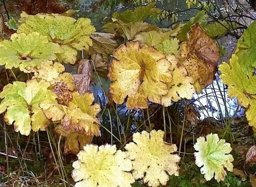22Hohenheim botanical garden, Nov. 1,enclos*ure