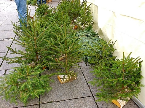 I bought one of these little trees and carried it home via U-bahn and bus.