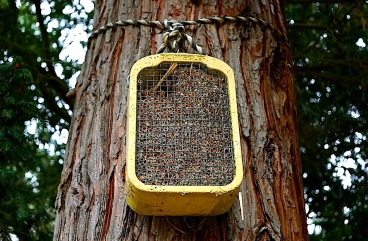 An insect house.