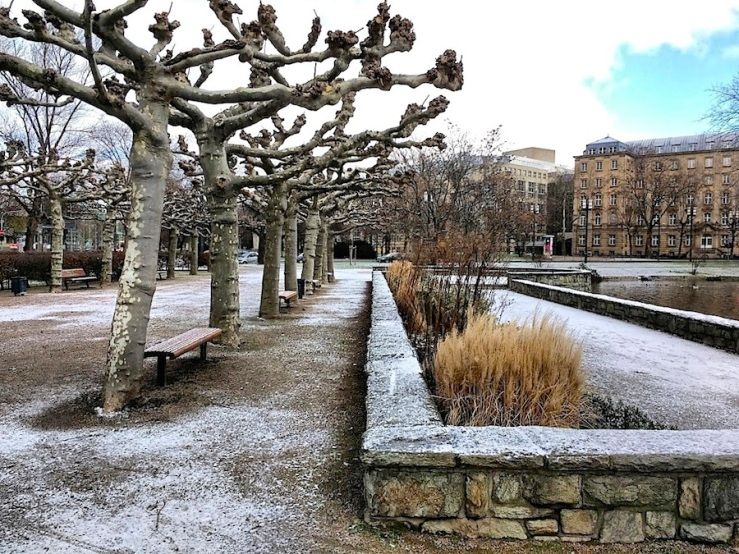 Rows of pollarded trees, Frankfurt, 2016, enclos*ure