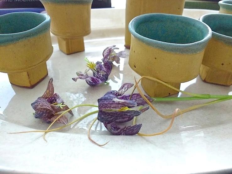 32 potted Fritillaria meleagris, Feb. 2016, Stuttgart, enclos*ure