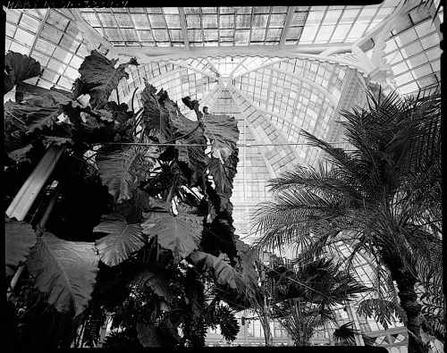 Conservatory Dome 1, by J. Lowe, 1981, San Francisco, Library of Congress