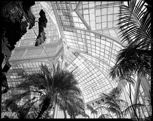 Conservatory Dome 2, by J. Lowe, 1981, San Francisco, Library of Congress