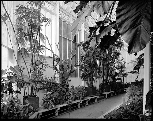 Conservatory Interior, by J. Lowe, 1981, San Francisco, Library of Congress