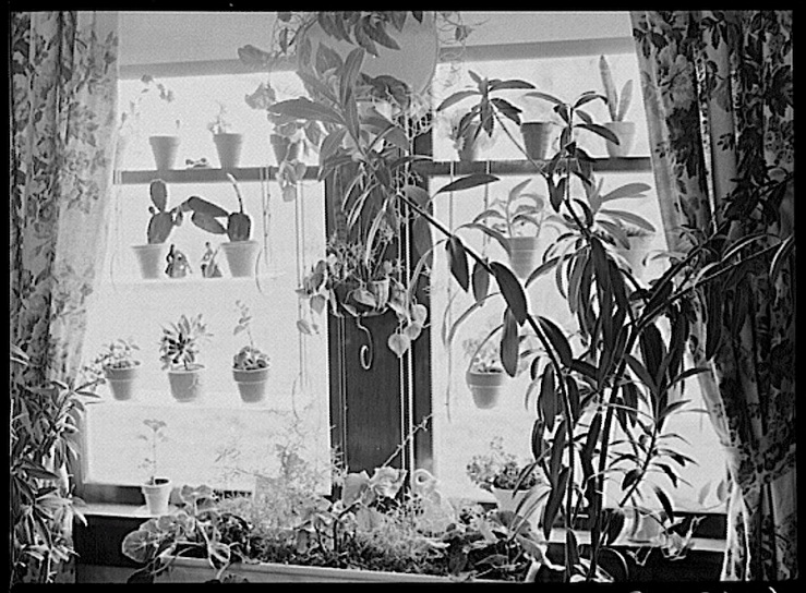Farmhouse window, John Vachon, Library of Congress