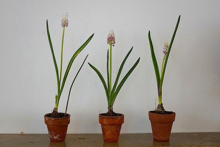 10 In a vase, Mar. 21, enclos*ure