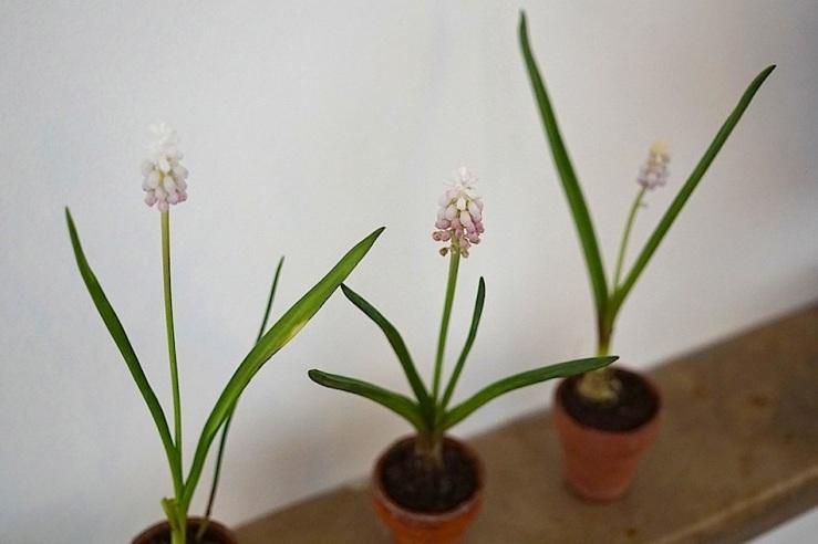 14 In a vase, Mar. 21, enclos*ure
