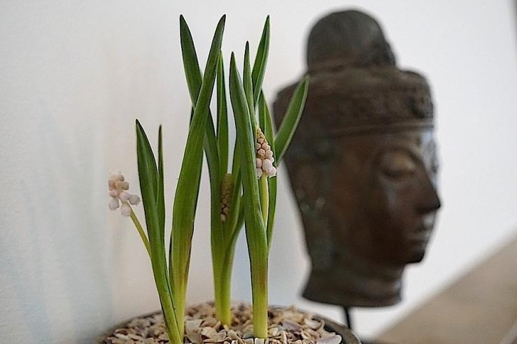 17 In a vase, Mar. 21, enclos*ure