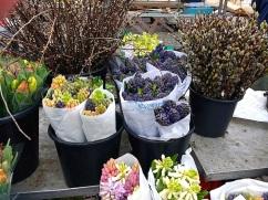 Cut Dutch hyacinths.