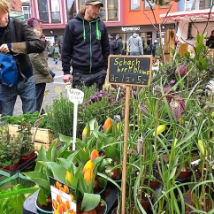 Potted forced tulips and Fritallarias. This was in the farmers' market in the square in front of the Rathaus, or Town Hall.