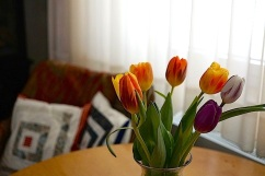 My tulips, Stuttgart, March 5, 2016, enclos*ure