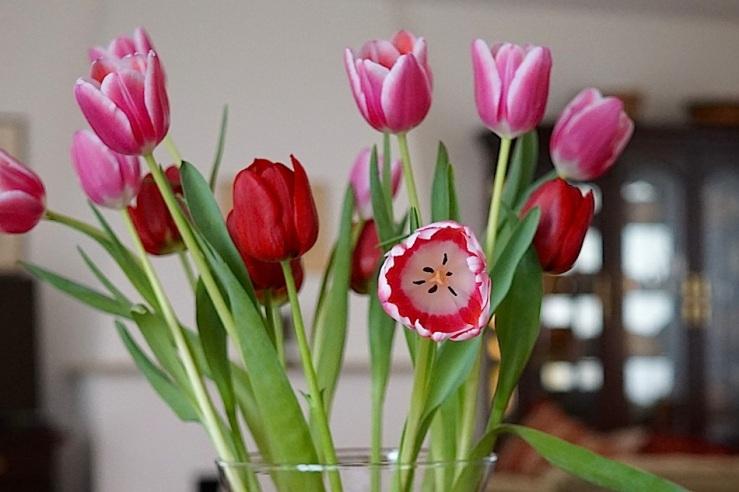 9 In a vase, Mar. 21, enclos*ure
