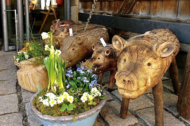 Easter pigs, Mar. 21, enclos*ure.
