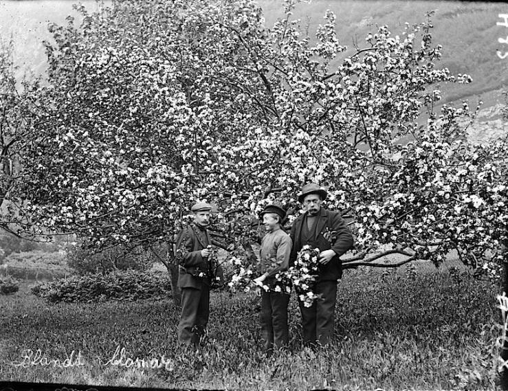 Among flowers, ca. 1910, Fylkesarkivet i Sogn og Fj… on flickr
