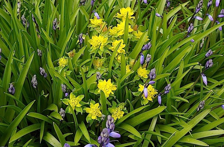 Euphorbia, enclos*ure