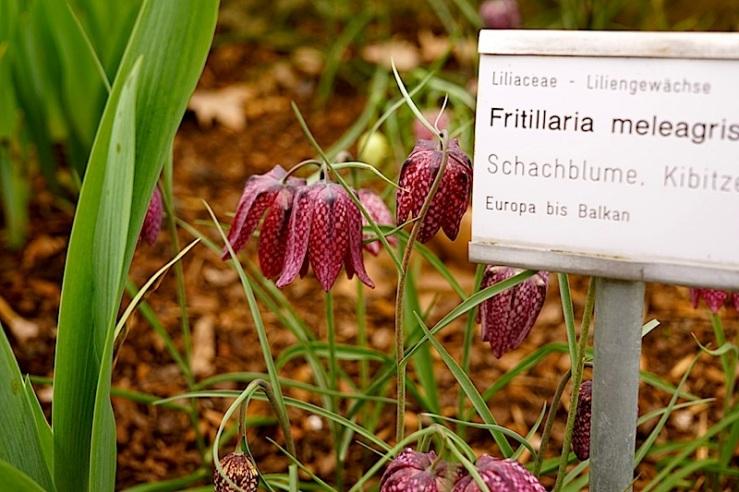 Fritillaria 1, enclos*ure