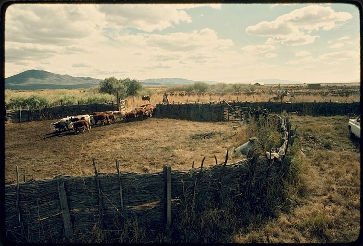 Ninety-Six Ranch corral, Paradise Valley, 1978, Library of Congress