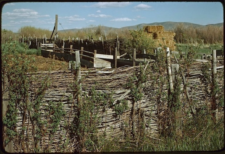Ninety-Six Ranch willow fence, Paradise Valley, 1978, Library of Congress