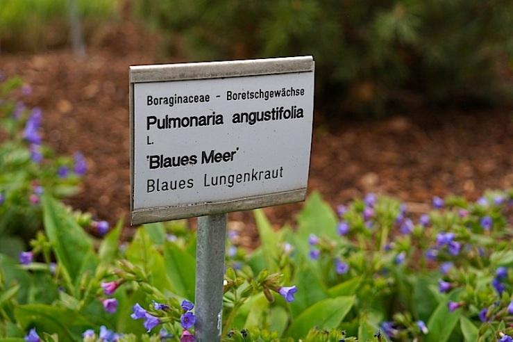 Pumonaria, enclos*ure