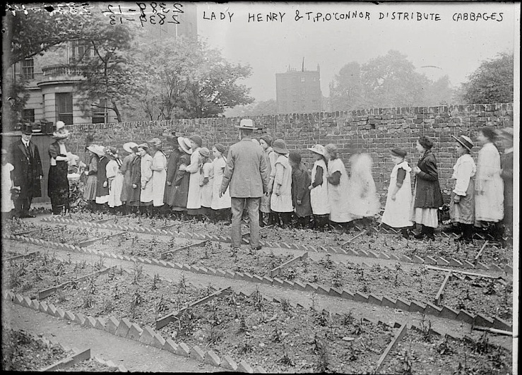 Cabbage distribution, Library of Congress