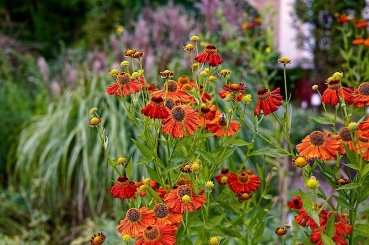 16a Hohenheim garden, Aug 23, 2016, enclos*ure