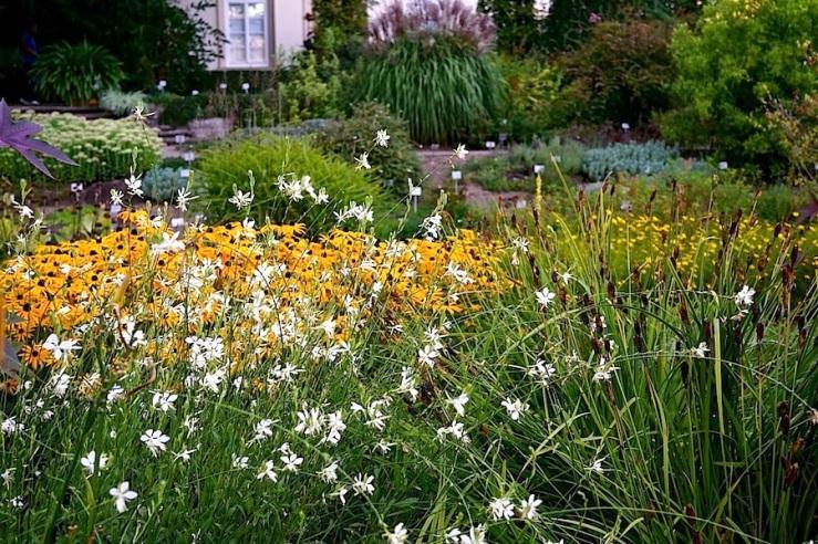 26a Hohenheim garden, Aug 23, 2016, enclos*ure