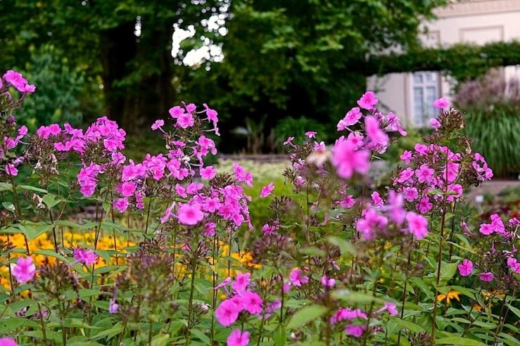 29a Hohenheim garden, Aug 23, 2016, enclos*ure