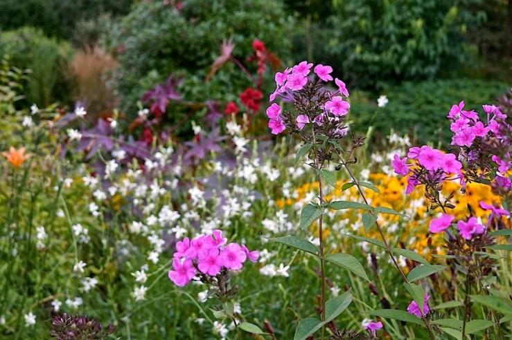 32a Hohenheim garden, Aug 23, 2016, enclos*ure