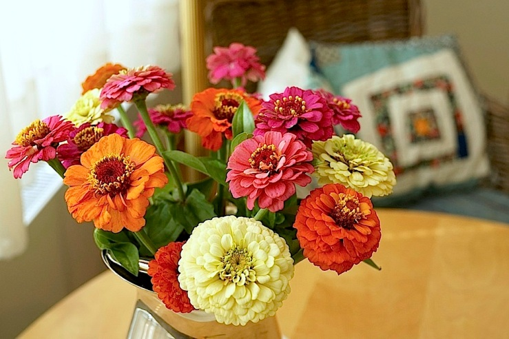 In a vase on Monday, zinnias bouquet, Aug 22, by enclos*ure