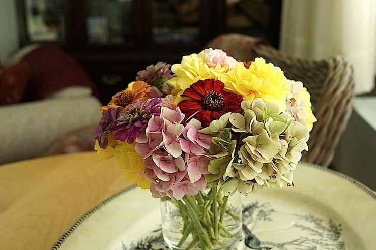 on red zinnia, Aug 29, In a vase, enclos*ure